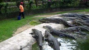 croc farms